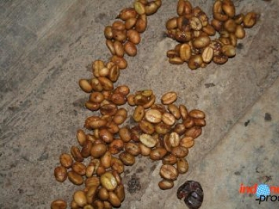 Luwak Coffee or Civet Coffee The Most Expensive Coffee From Indonesia
