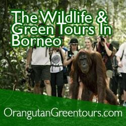 orangutangreentours.com